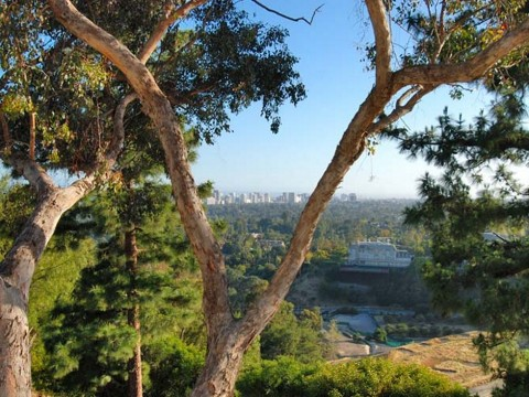Trees obstruct view in Beverly Hills