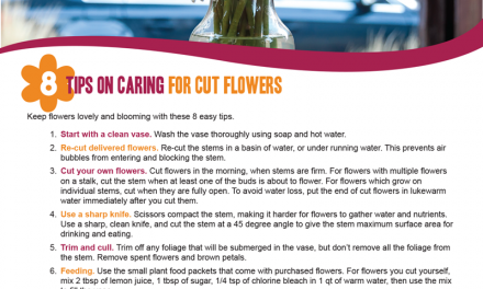 FARM: 8 Tips on caring for cut flowers