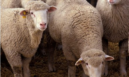 Don't be a sheep: Take action on income inequality and support your community