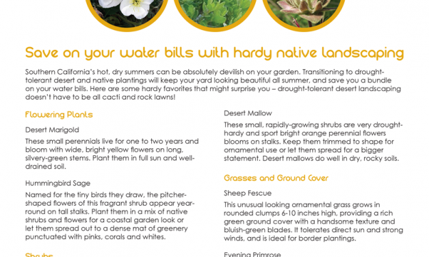 FARM: Save on your water bills with hardy native landscaping