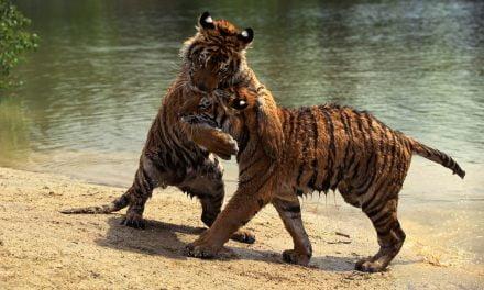 Taming animal spirits in client buy-sell behavior