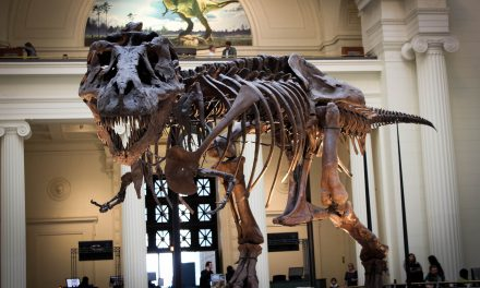May dinosaur fossils be considered part of a property's mineral estate?
