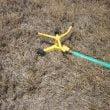 drought_lawn