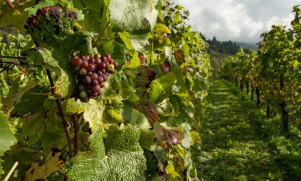 May a homeowner operate a vineyard on a property that prohibits commercial and business activity?