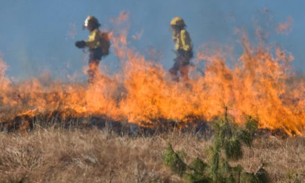 Tight zoning and low inventory fuel wildfire risk