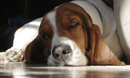 Landlords may not favor surgically altered pets