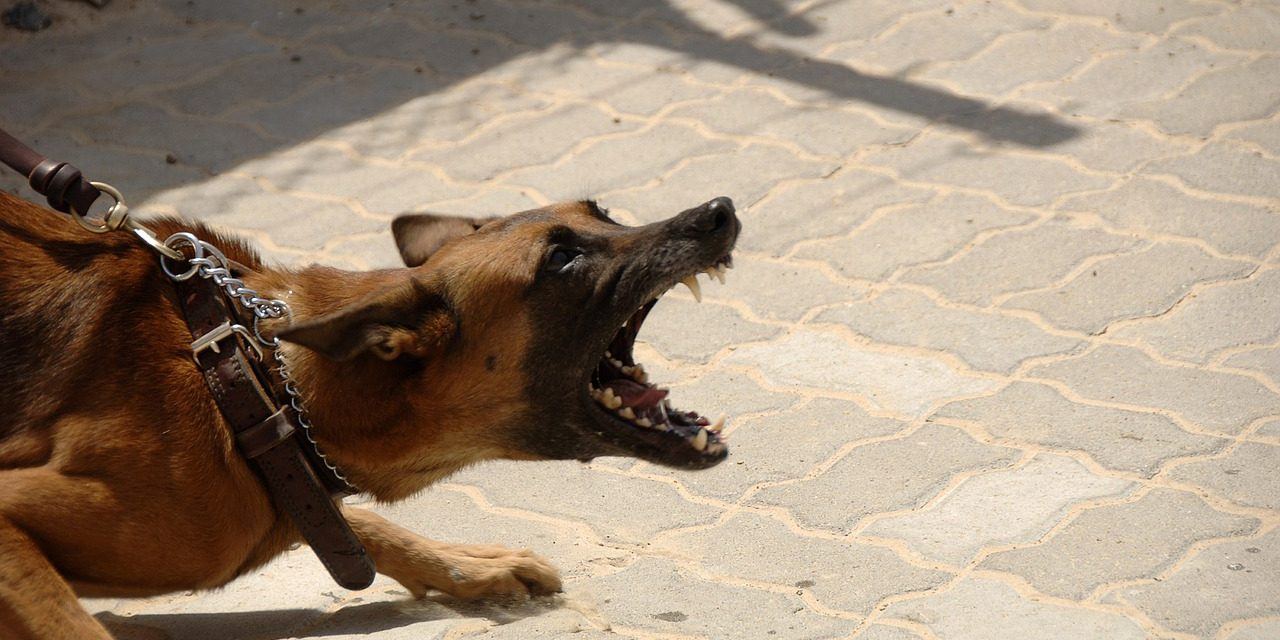 How California landlords may deal with unauthorized pets